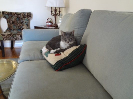 Max the Cat sleeping on a Christmas pillow.